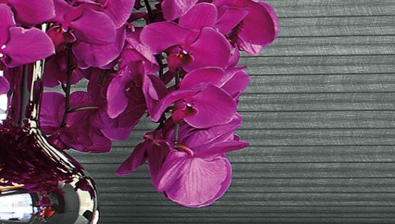 Style Icon iris Apfel design elements