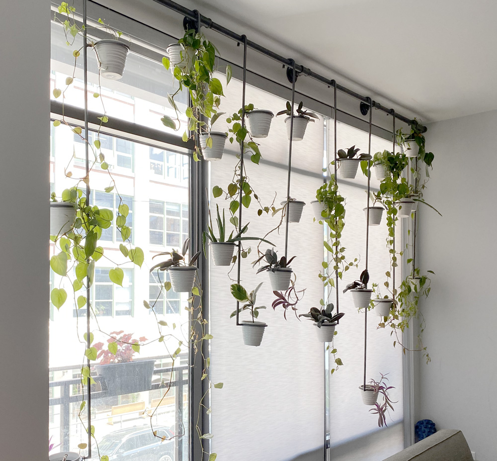 plant hangers in floor to ceiling windows and roller shades Chicago IL