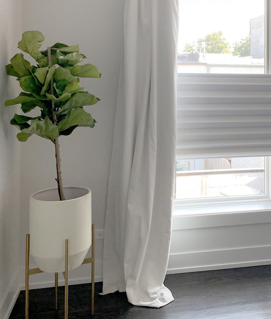 solera roman shades with white drapery and fig tree in Chicago 60657